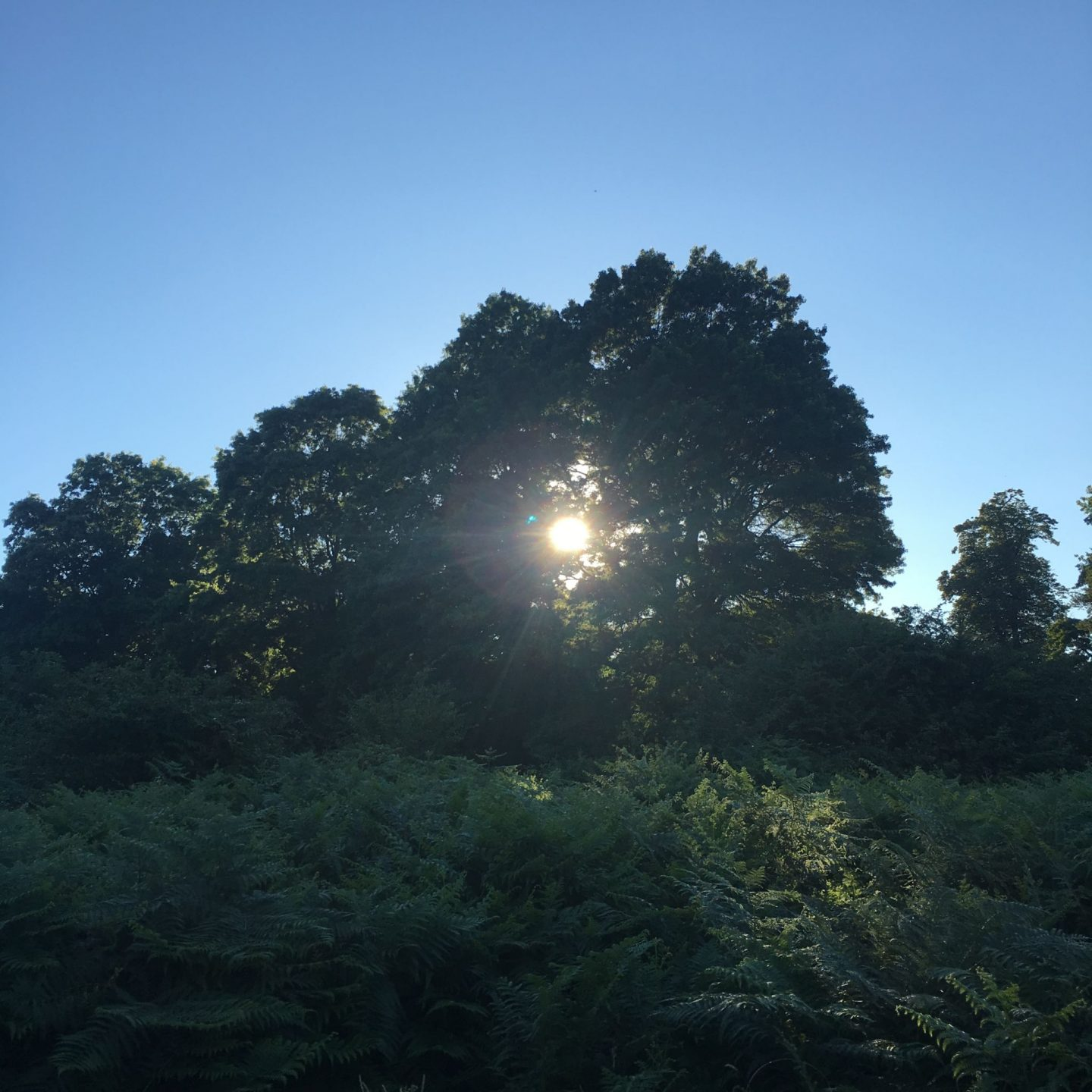 What to see in Richmond Park, London