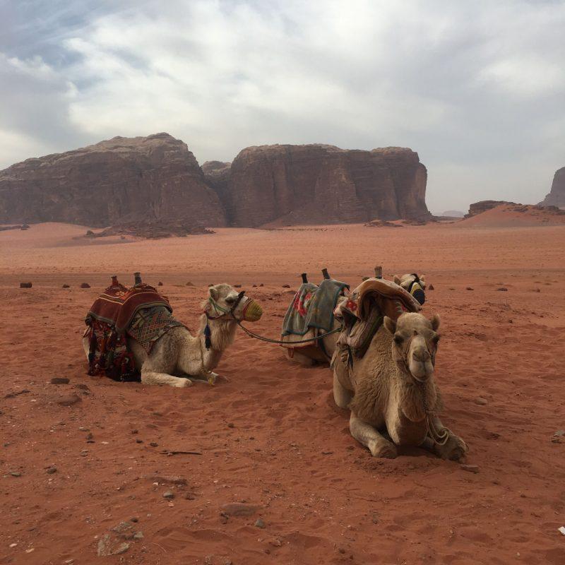 Camels, Wadi Rum, Jordan