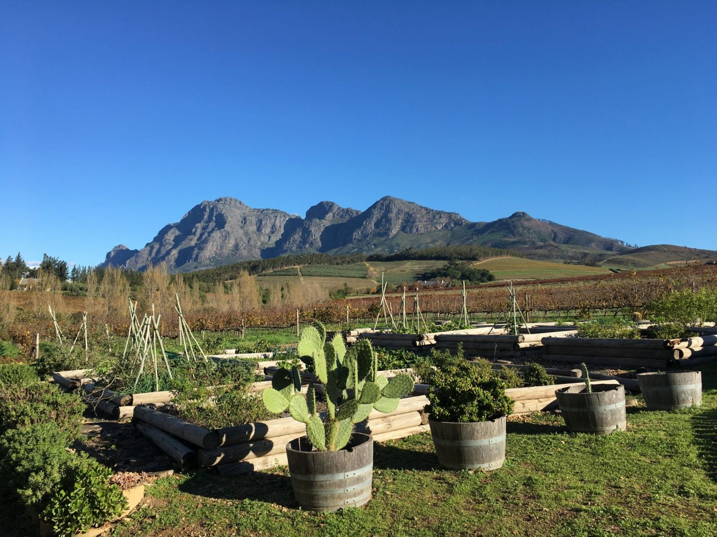 Cape Winelands, South Africa – area guide & must visit wine farms